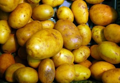 Bulvių priežiūra