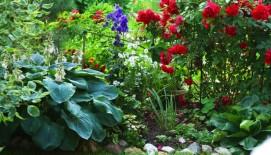 Dekoratyvinių augalų priežiūra